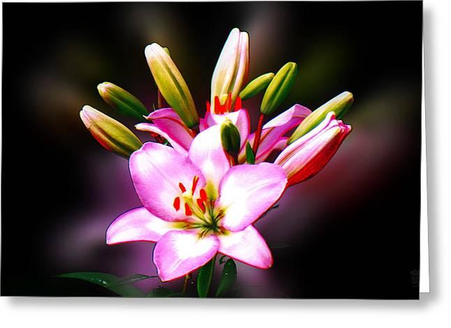 The Lilium Garden - Pink Trumpet Lily Greeting Card by Li   van Saathoff