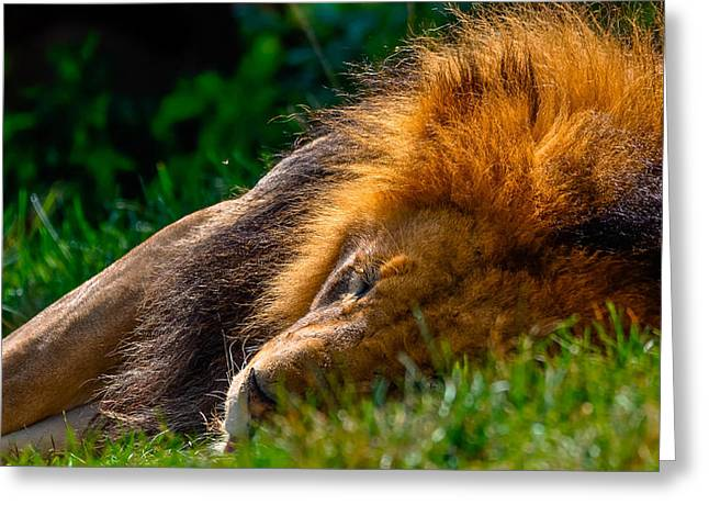 The Lion Sleeps Tonight Greeting Card by Brian Stevens