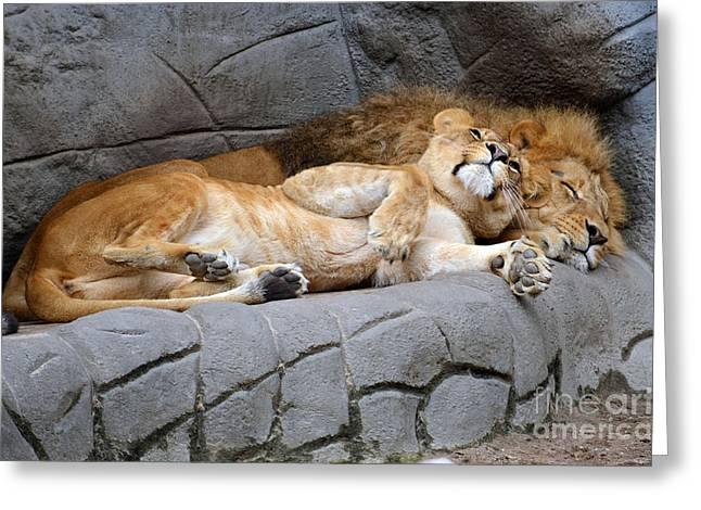 The Lion Sleeps Tonight Greeting Card by Eva Kaufman