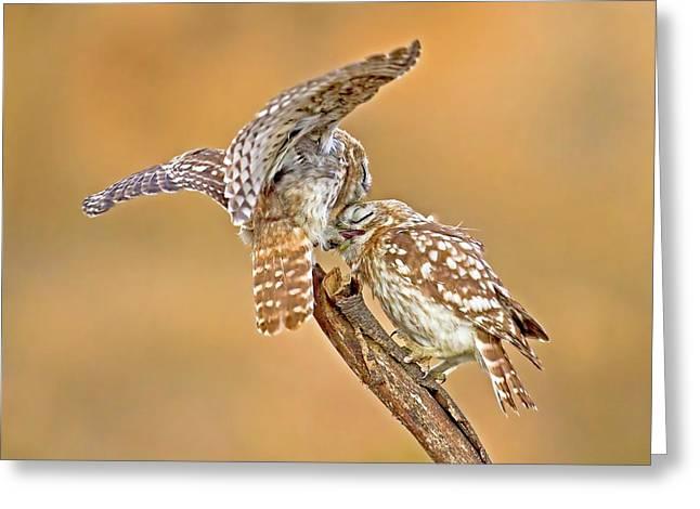 The Little Owl Athene Noctua Greeting Card