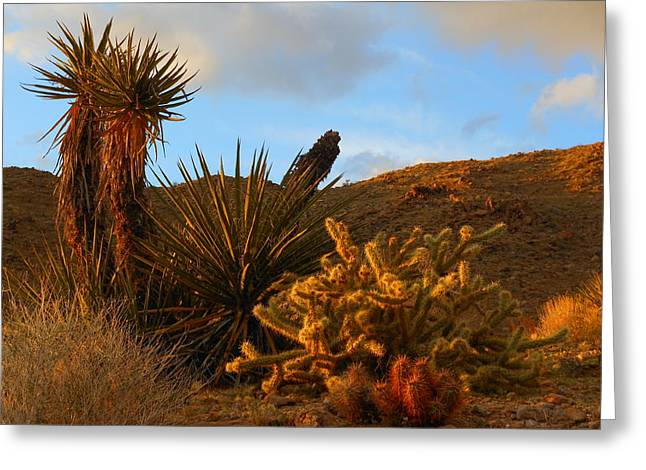 The Living Desert In Winter Greeting Card