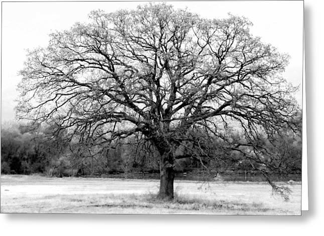 The Living Tree Greeting Card by Deborah  Crew-Johnson