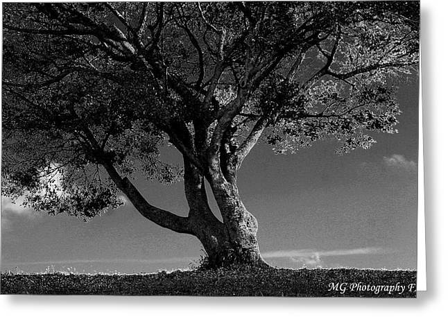 The Lone Tree Black And White Greeting Card
