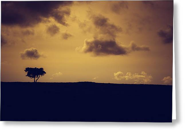 The Loneliness Of A Moorland Tree Greeting Card by Chris Fletcher