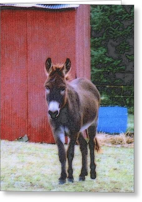 The Lonely Donkey Greeting Card by Kay Novy