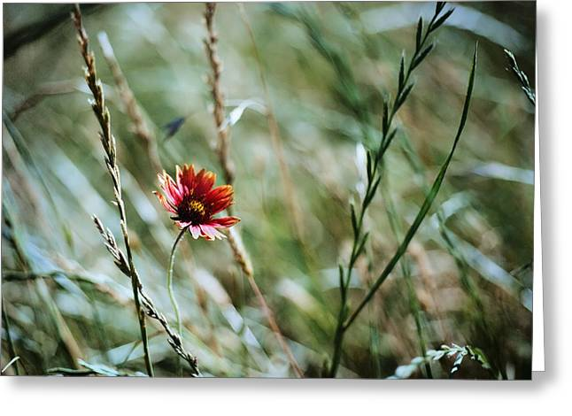 The Lonely Flower Greeting Card by Linda Unger