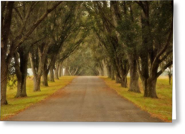 The Long Road - Central Florida Greeting Card by Mary Machare
