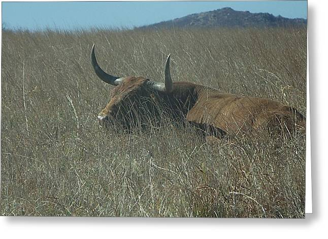 Greeting Card featuring the photograph The Longhorn by Alan Lakin
