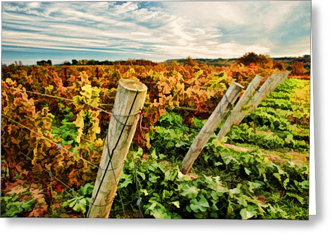 The Look Of Fall In The Vineyard Sky Greeting Card by Elaine Plesser