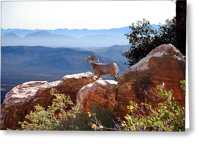 The Lookout Greeting Card
