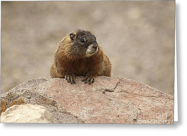 The Lookout Greeting Card by Bob Dowling