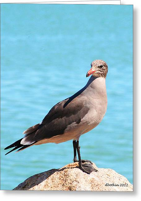 The Lookout Greeting Card by Dick Botkin