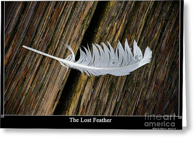 The Lost Feather Greeting Card by Tikvah's Hope