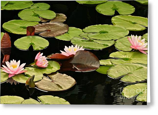 The Loveliness Of Waterlilies Greeting Card by Byron Varvarigos