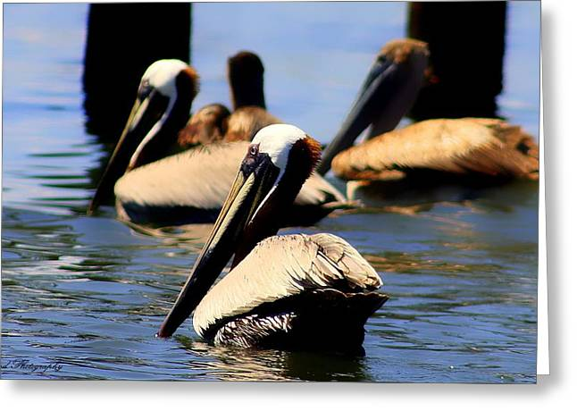 The Lovely Pelican  Greeting Card