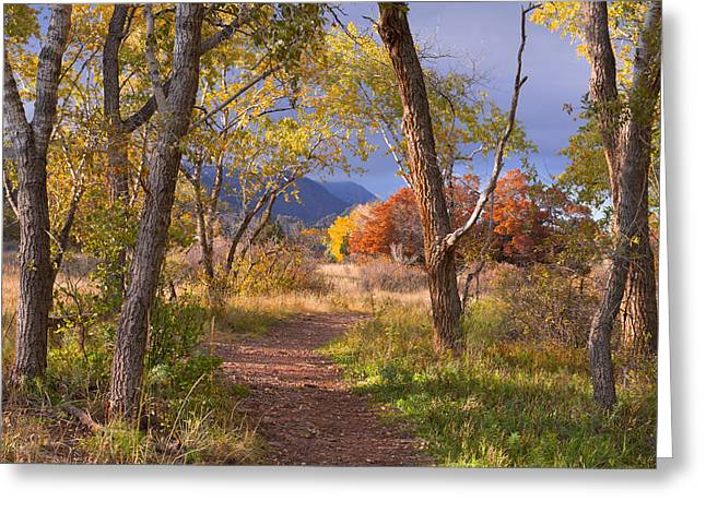 The Lure Of The Lonely Pathway Greeting Card by Tim Reaves