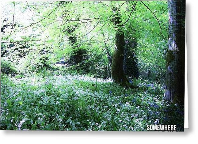 The Magical Forest Around Blarney Greeting Card