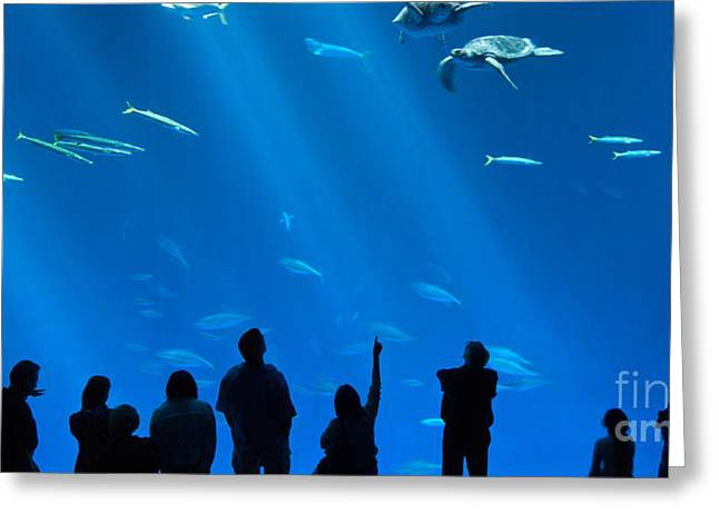 The Magnificent Open Sea Exhibit At The Monterey Bay Aquarium. Greeting Card by Jamie Pham