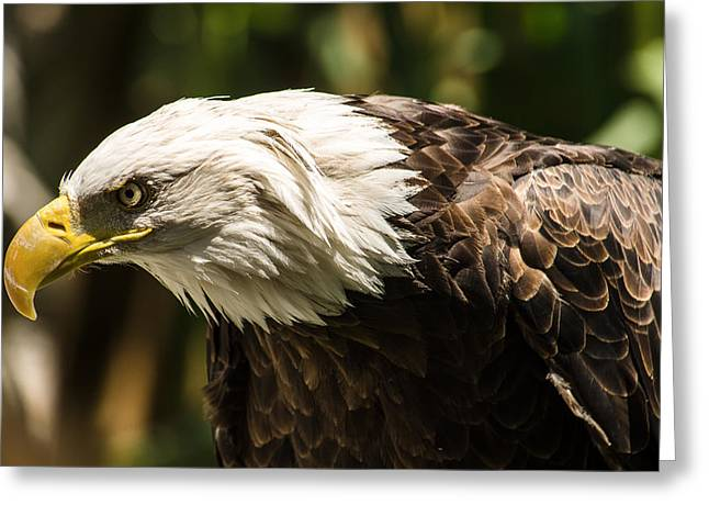 Greeting Card featuring the photograph The Majestic American Bald Eagle by Yeates Photography