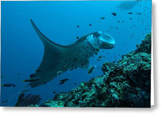 Greeting Card featuring the photograph The Manta From Manta Alley by Terry Cosgrave