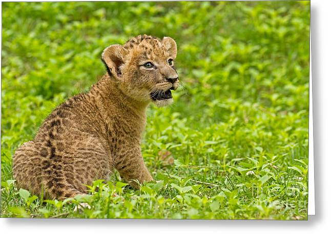 The Markings Of Youth Greeting Card by Ashley Vincent