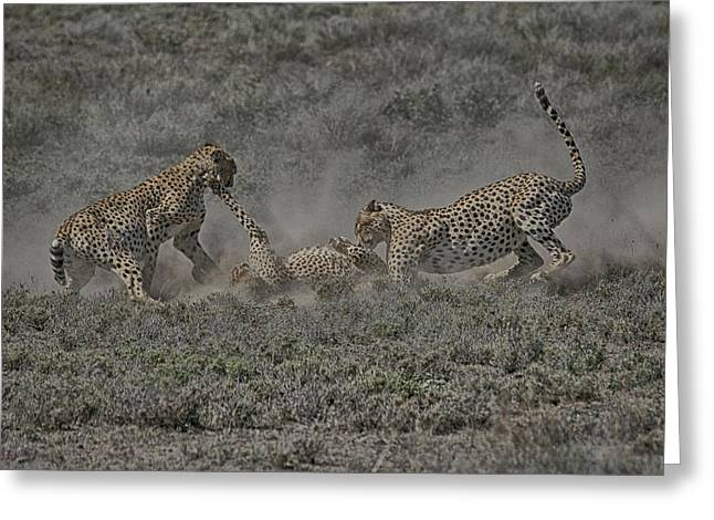 Greeting Card featuring the photograph The Mating Game 2 by Gary Hall
