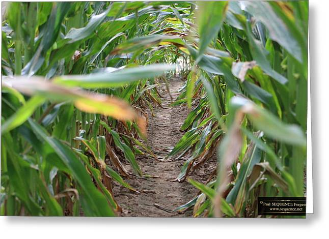 The Maze  Greeting Card by Paul SEQUENCE Ferguson             sequence dot net