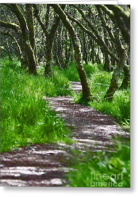 The Meandering Path Greeting Card by Lynne Sutherland