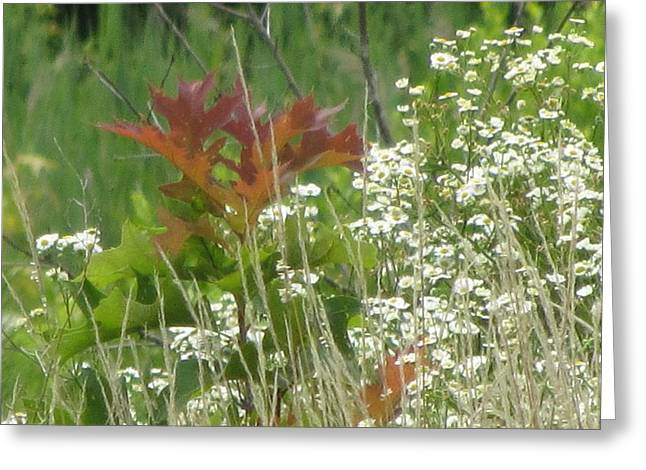 The Mighty Tiny Oak Amidst White Flowers Greeting Card by Debbie Nester