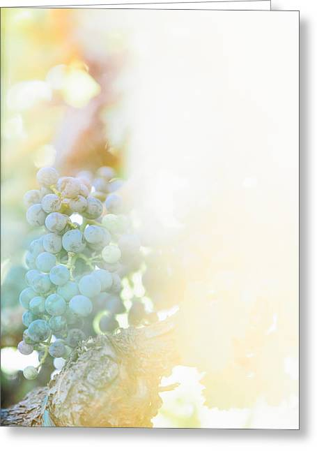 The Modern Grape 2 Greeting Card by Clint Brewer