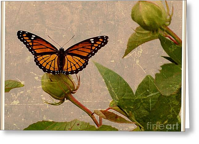 The Monarch Greeting Card by Christy Ricafrente