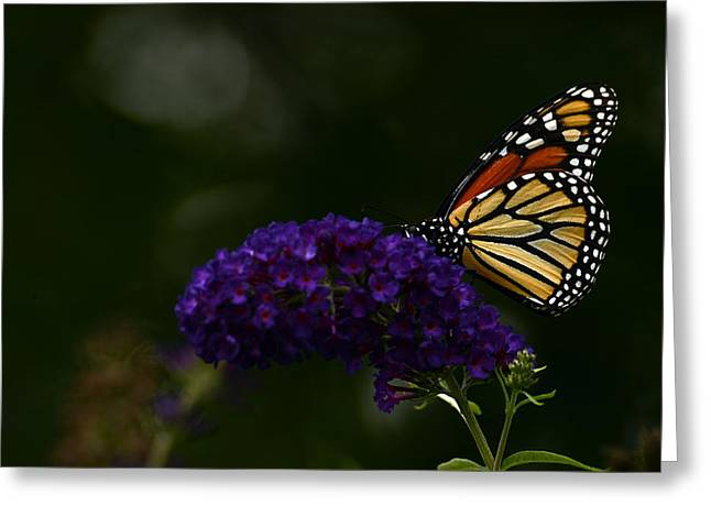 The Monarch Rules Greeting Card by Wanda Brandon