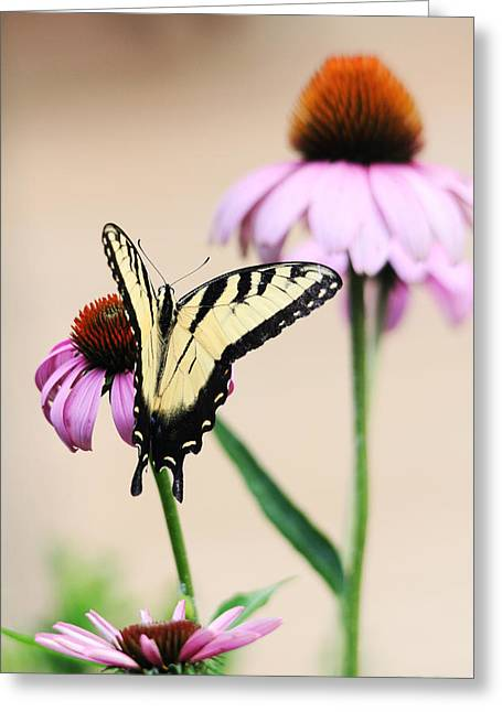 Greeting Card featuring the photograph The Swallowtail by Trina  Ansel