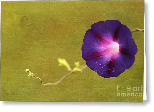 The Morning Glory Greeting Card by Darren Fisher