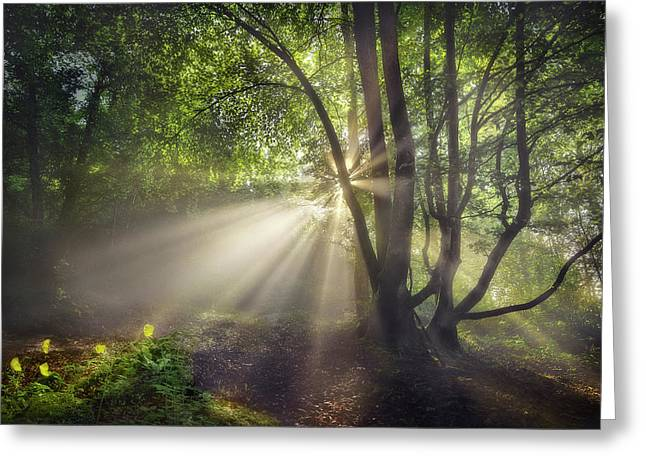 The Morning Light Greeting Card by Fran Osuna