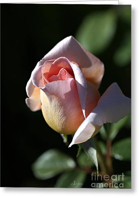 The Morning Pink Rose Greeting Card