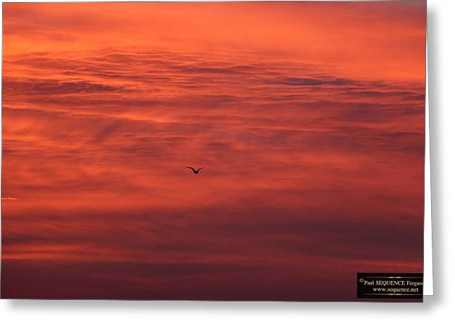 The Morning View 4 Greeting Card by Paul SEQUENCE Ferguson             sequence dot net