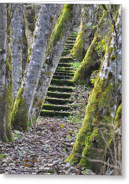 The Moss Stairs Greeting Card