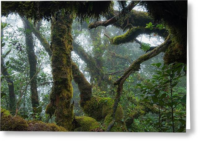 The Mossy Forest Of The Cameron Highlands Greeting Card