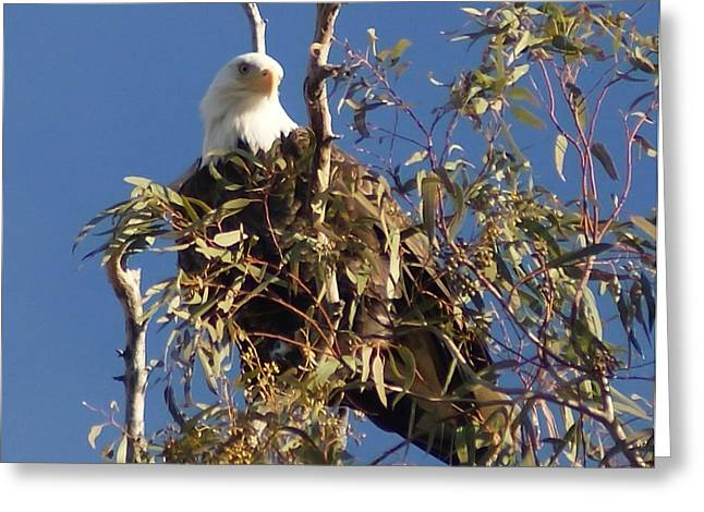 Greeting Card featuring the photograph The Most Magnificant Bird by Debby Pueschel