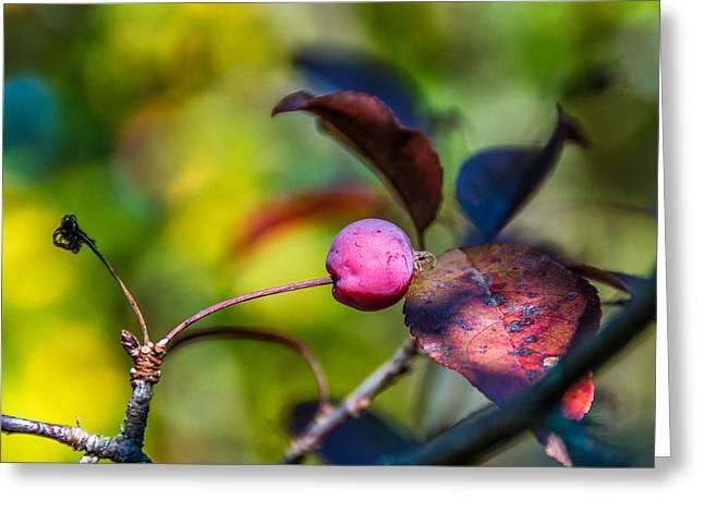 The Mysteries Of Autumn Greeting Card by Steve Harrington