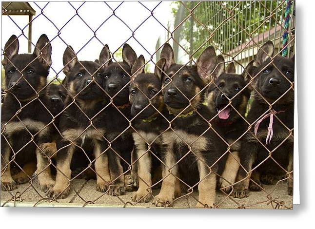 Greeting Card featuring the photograph The N Litter by John Babis