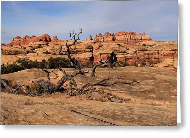 The Needles At Canyonlands National Park Greeting Card