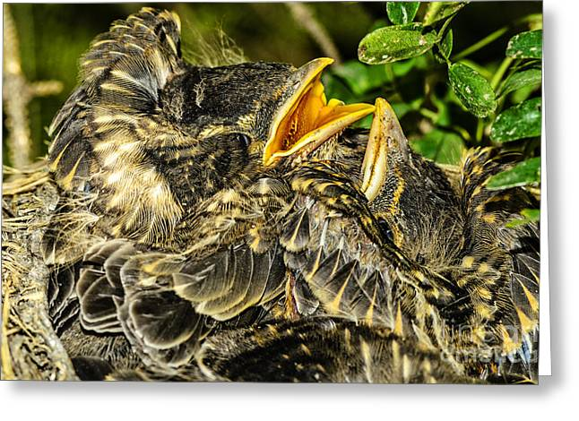 The Nestlings In Anticipation Of Food Greeting Card