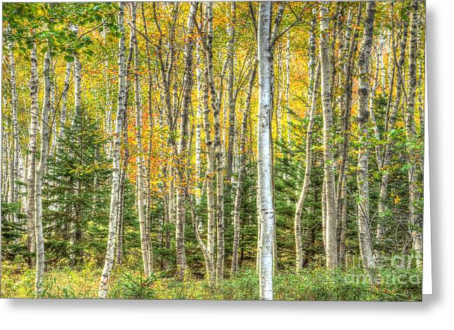 The North Woods Greeting Card by Wanda Krack