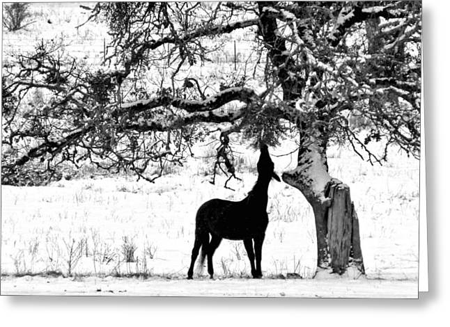 Greeting Card featuring the photograph The Ojbective by Julia Hassett