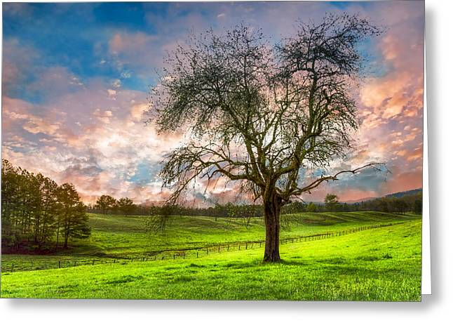 The Old Apple Tree At Dawn Greeting Card by Debra and Dave Vanderlaan