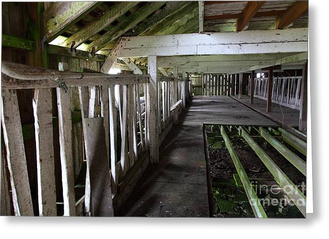 The Old Pierce Point Ranch At Point Reyes California 5d28128 Greeting Card