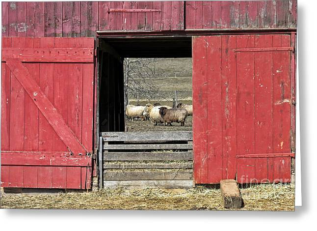 The Old Sheep Barn Greeting Card by Olivier Le Queinec