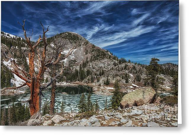 The Old Tree And Lake Mary Greeting Card by Mitch Johanson